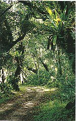 Forest on Atiu